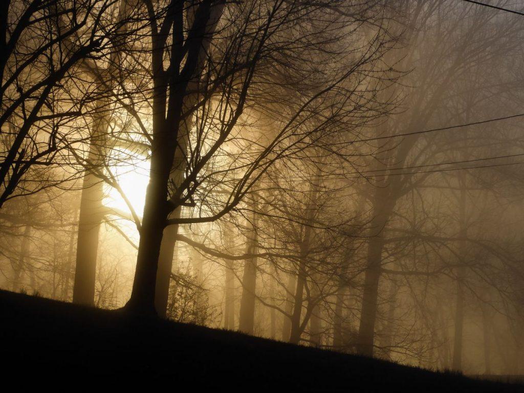 Sisli-Hava-Fotograflari-7-1024x768 Sisli Havada Fotoğraf Çekimi Nasıl Yapılır?