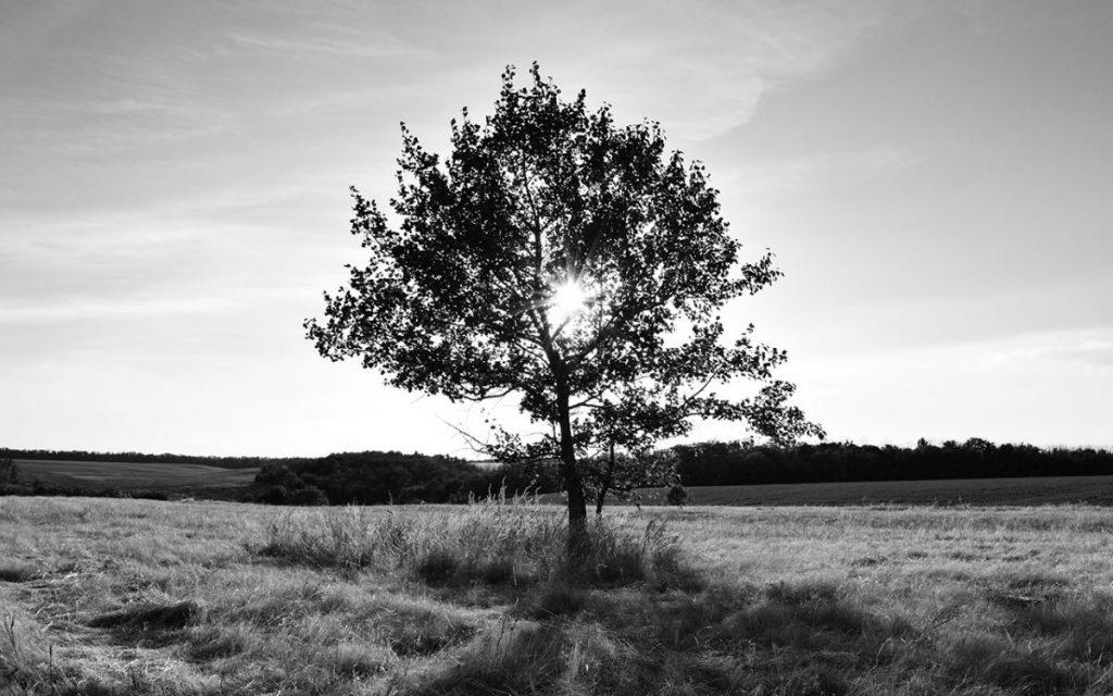 siyah-beyaz-manzara-fotografi-agac-1024x640 Siyah Beyaz Manzara Fotoğrafçılığı İçin 5 İpucu